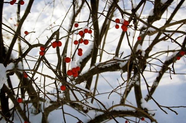perty berries