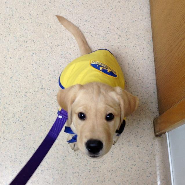 fenwick at the vet