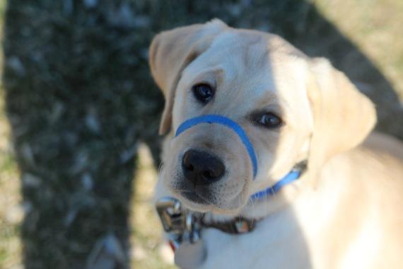 playground pup